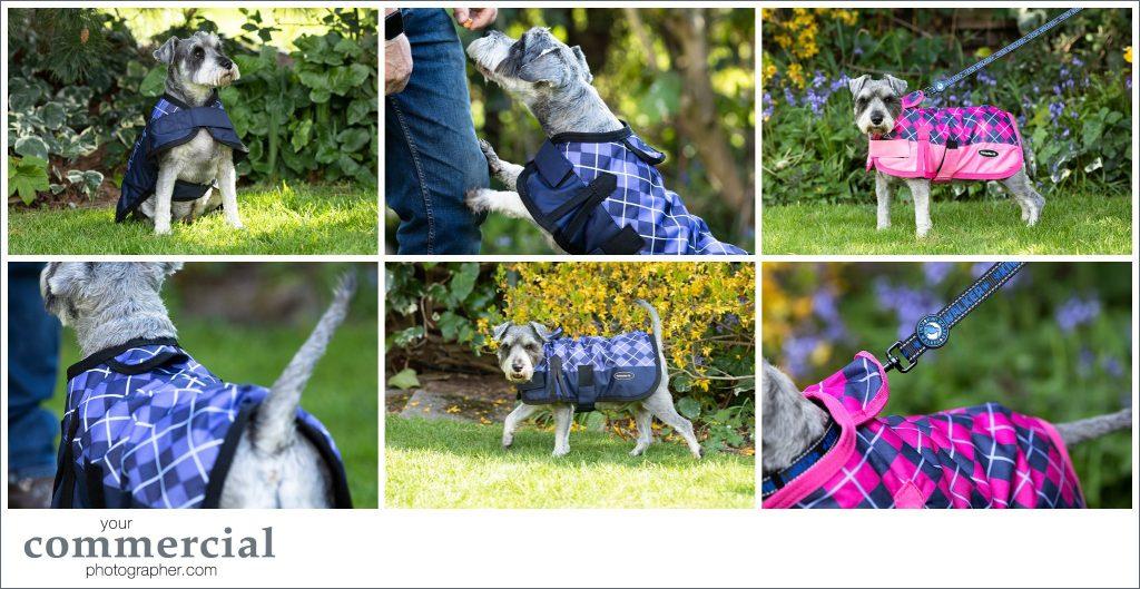 Pet product photography Lancashire