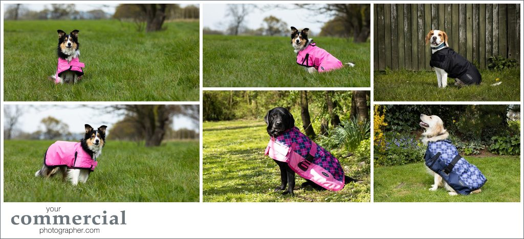 Pet product photography Manchester
