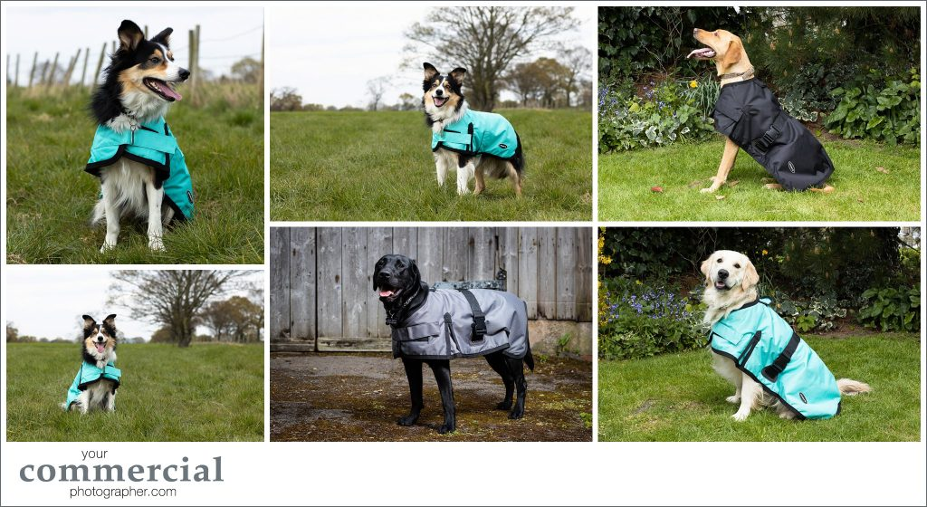 Pet product photography Northwich