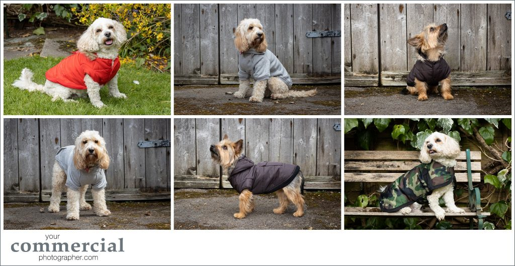 Pet product photography North Wales